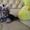 Йоркширский терьер,   щенки! #408905